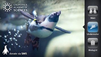 Screenshot of Pocket Penguins