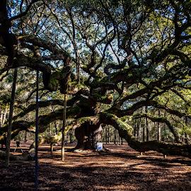 by Jonathan Jackson - Nature Up Close Trees & Bushes