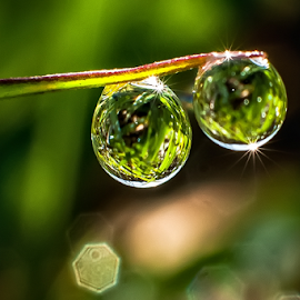 2.... by Kawan Santoso - Nature Up Close Natural Waterdrops