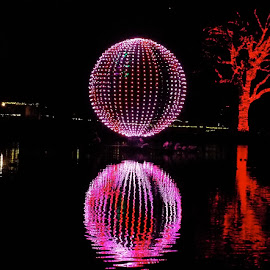 Phoenix Zoo Lights Center Lake by Donna Probasco - Novices Only Objects & Still Life (  )
