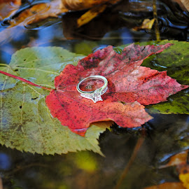 Beauty in nature by Fawnia Celone - Wedding Other ( water, love, fall leaves, nature, wedding, creek, engagement ring )