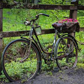 Nostalgic by Eva Lechner - Transportation Bicycles ( still life, artistic, old bike, nostalgic )