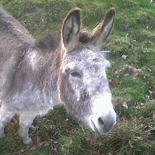 Larry the motivational donkey LOGO-APP點子