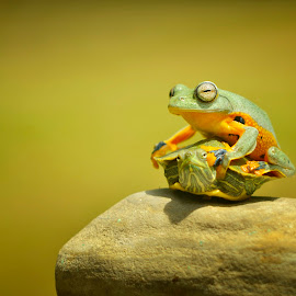 The fastest vehicles by Ais Setiawan - Animals Amphibians ( frog, macro photography, turtle )