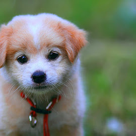 Anjing tetangga by Denny Iswanto - Animals - Dogs Portraits