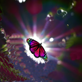 butterfly by Leslie Collins - Digital Art Animals ( butterfly, sun rays )