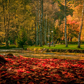 Relaxation in nature by Ado Mekić - Nature Up Close Other plants ( nature, autumn, colors, trees, river )
