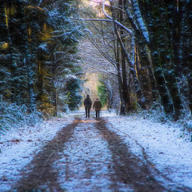 Forest walk by Doug Clement - Landscapes Forests ( winter, nature, snow, trail, forest, hike )