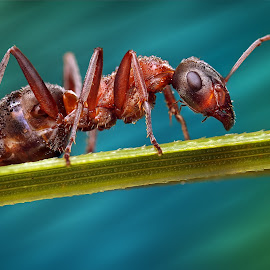 up by Ondrej Pakan - Animals Insects & Spiders ( macro, macro photography, bug, ant, insect )