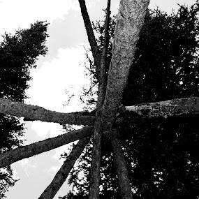Tipi  by Denver Pratt - Nature Up Close Trees & Bushes