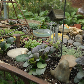 My mom's wheelbarrow garden, Indianapolis by Lori Rider - Nature Up Close Other plants