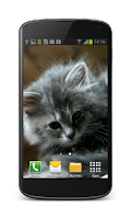 Screenshot of Cute Kitten Video Wallpaper