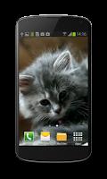 Screenshot of Cute Kitty Video Wallpaper