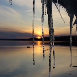 by Laura Gardner - Novices Only Landscapes ( icecles, water, nd, ice, missouri river, spring, river )