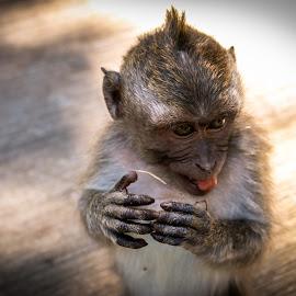 Like a baby monkey by Natalia Dobrescu - Animals Other Mammals ( bali, ubud, close up, mammal, photography, portrait, baby monkey, monkey forest, animal portrait, indonesia, asia, monkey, closeup, animal,  )