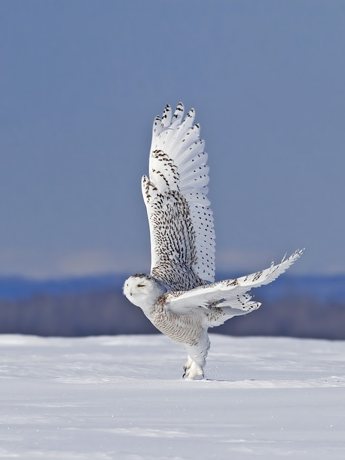 by Rachel Bilodeau - Animals Birds