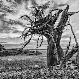 Beach Tree by Kaye Mendoza - Novices Only Landscapes ( fuji x, northcoast trail, beach, hiking, british columbia )