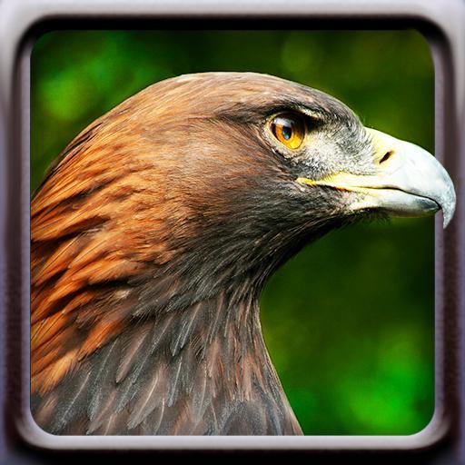 鳥的聲音 娛樂 App LOGO-APP試玩