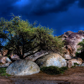 Desert Trees and Rocks by Suthil Guico - Landscapes Deserts