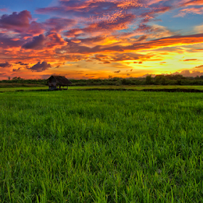 The Hut by Charliemagne Unggay - Landscapes Prairies, Meadows & Fields ( field, colorful sky, nature, sunset, landscape )