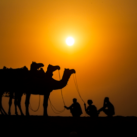 the ships and the sailors by Vineet Singh - Landscapes Sunsets & Sunrises ( camel, sunset, pushkar camel fair, india, travel, landscape, people,  )