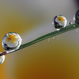 :: FOUR :: by Dedy Haryanto - Nature Up Close Natural Waterdrops