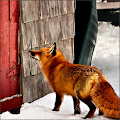 Download How to Trap a Fox APK