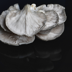 Mushroom by Cristobal Garciaferro Rubio - Nature Up Close Mushrooms & Fungi