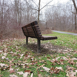 Park Bench by Marcia Taylor - Novices Only Landscapes (  )