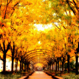 The Path by Michelle Wermuth - City,  Street & Park  City Parks ( autumn, fall, yellow )
