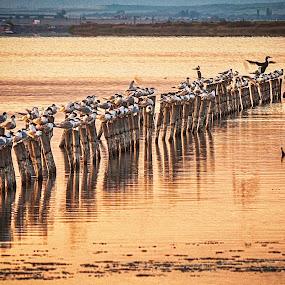 Birds sunset by MIhail Syarov - Landscapes Beaches ( order, cormorane, sunset, beach, birds, blue, orange. color )
