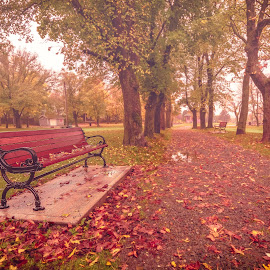 Bench at the Park by Gordon Follett - City,  Street & Park  City Parks ( park, nature, autumn, fall, city park )