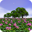 Clover Field Live Wallpaper icon