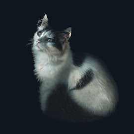 Expelled by Kiril Krastev - Animals - Cats Portraits ( canon, 58mm, cat, 44-2, russian, 70d, helios, bulgaria,  )