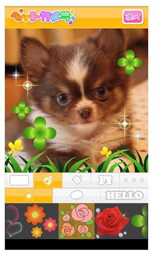 玩攝影App|Petcamera 讓您家寵物的照片更加可愛生動免費|APP試玩