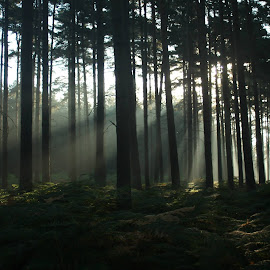 Morning03 by Molly-Jane Bowen - Landscapes Forests