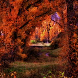 Mystical Autumn Morning by Terry Ricks - Digital Art Places ( autumn leaves, fall colors, bushes, autunm, fall, colorado, trees, granby colorado )