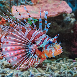Marine Fish by Roy Husada - Animals Other