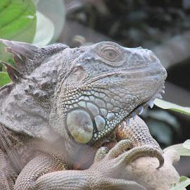 by Parthasarathi Banerjee - Animals Reptiles