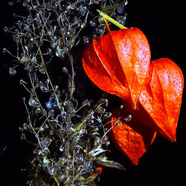 Red in ice  by Tihomir Beller - Nature Up Close Other plants