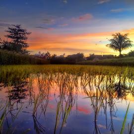 Reflection Coconut Tree by Randi Pratama M - Instagram & Mobile Android ( reflection, coconut, tree, indonesia, sunset )