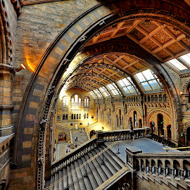 Natural History Museum by Iulia Breuer - Buildings & Architecture Public & Historical ( interior, historical, museum, public )