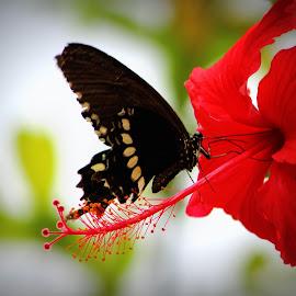 by Sujatha Bharathi - Nature Up Close Gardens & Produce (  )