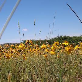top of Scotts Bluff Nebraska by Tamara Koontz - Nature Up Close Leaves & Grasses ( path, nature, landscape )
