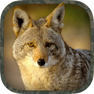 app coyote hunting calls apk for windows phone android games and apps. Black Bedroom Furniture Sets. Home Design Ideas