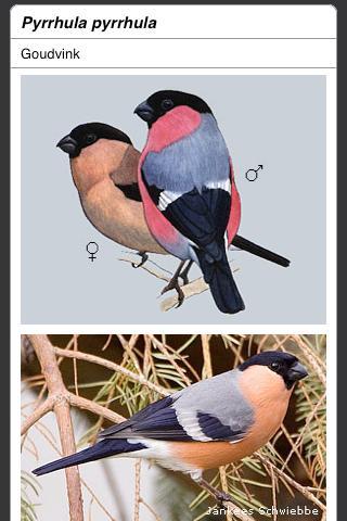 Tuinvogels van Nederland
