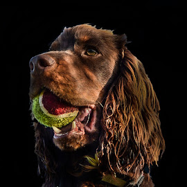 My Favorite Ball by Brian Noel - Animals - Dogs Portraits