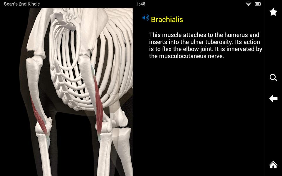 Dog Anatomy: Canine 3D - veterinary dog anatomy 3D Android Medical App
