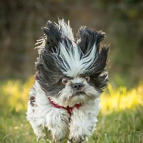 williams dog-2.jpg