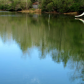 Reflections of Trees in Pond. by Terry Linton - Nature Up Close Water ( Earth, Light, Landscapes, Views, renewal, green, trees, forests, nature, natural, scenic, relaxing, meditation, the mood factory, mood, emotions, jade, revive, inspirational, earthly )